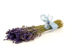 Bundle of dried lavender with a blue ribbon Stock Images