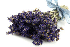 Bundle of dried lavender with a blue ribbon Stock Image