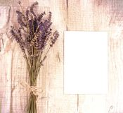 Bundle of dried lavender flowers and shit of paper with copy sp Royalty Free Stock Images
