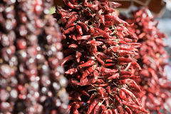 Bundle of dried red cayenne hot pepper on market Royalty Free Stock Photo