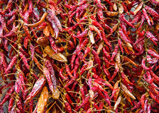 Bundle of dried red hot pepper Stock Photo
