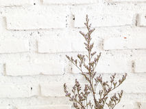 Bundle of dry lavender at white brick wall Royalty Free Stock Images