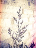 Bundle of dry lavender at white brick wall Royalty Free Stock Photography
