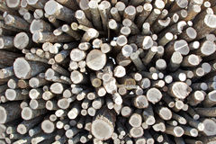 Bundle of Firewood Royalty Free Stock Photo