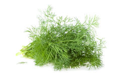 The Bundle of Fresh Dill Stock Images