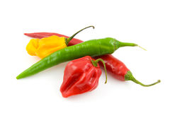 Bundle of fresh hot peppers Stock Image
