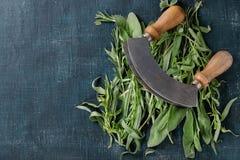Bundle of fresh Italian herbs Stock Photos