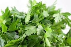 Bundle of fresh Italian parsley stock photo