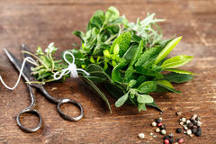 Bundle of fresh Kitchen Herbs Stock Photography