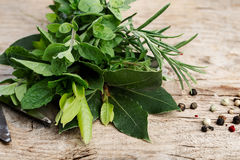 Bundle of fresh Kitchen Herbs Stock Images
