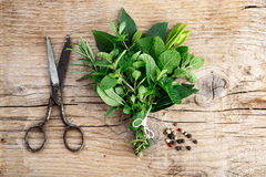 Bundle of fresh Kitchen Herbs Royalty Free Stock Image