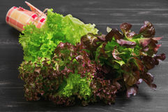 Bundle of fresh leaves  green and red lettuce Stock Photography
