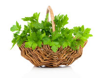 Bundle of fresh parsley in a wicker basket, Stock Images
