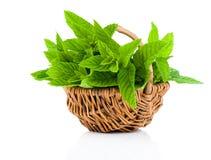Bundle of fresh spearmint in a wicker basket Stock Images