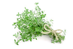 Bundle of fresh thyme spice isolated on white background.  stock photo