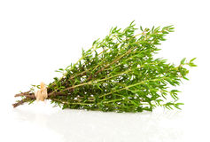 Bundle of fresh thyme Royalty Free Stock Image