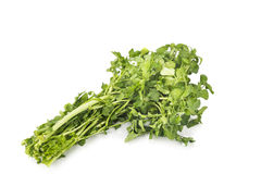 Bundle of freshly harvested watercress rich in vitamin and nitra Stock Photos