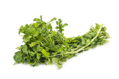 Bundle of freshly harvested watercress rich in vitamin and nitra Royalty Free Stock Photo
