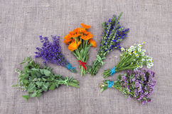 Bundle of freshly picked medical herbs placed on linen background Stock Image