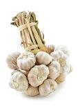 Bundle of garlic. Stock Photos