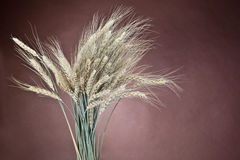 Bundle of the gold wheat ears Stock Photo