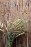 Bundle of the gold wheat ears Royalty Free Stock Image