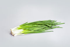 Bundle of Green onion Royalty Free Stock Photography