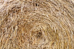 Bundle of hay Stock Image