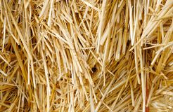 Bundle of Hay Royalty Free Stock Images