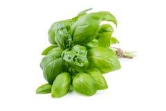 Bundle of herbs basil Royalty Free Stock Photo