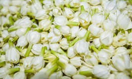 Bundle of jasmine flowers. Lay together Stock Photo
