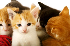 Bundle of Kitties Stock Images