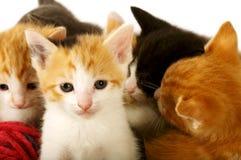 Bundle of Kitties Stock Images