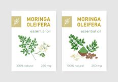 Bundle of labels with Miracle Tree or Moringa oleifera. Set of tags with edible herbaceous plant used in phytotherapy. Botanical vector illustration in vector illustration
