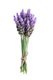 Bundle of lavender Stock Image