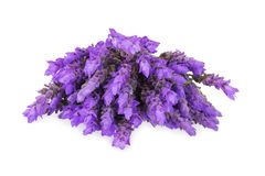 Bundle of lavender Stock Image