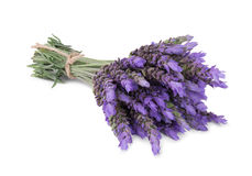 Bundle of lavender Royalty Free Stock Photos