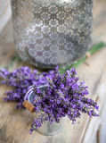 Bundle of lavender flowers Royalty Free Stock Photo