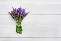 Bundle of lavender Stock Photography