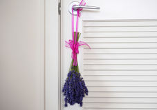A Bundle of Lavender hanging to dry. Bundle of lavender hanging on the pantry door to dry by a pink ribbon Royalty Free Stock Photography