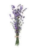 Bundle of lavender. Stock Images