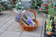 Bundle of lavender in a wicker basket on Christmas street fair Stock Photo