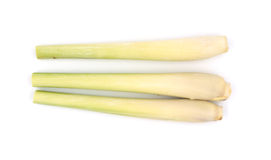 Bundle of lemongrass isolated on white background Royalty Free Stock Images