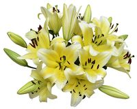 A bundle of Lily. A bundle of yellow Lily isolated on white Royalty Free Stock Photography