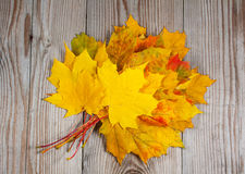 Bundle of maple leaves on wood Royalty Free Stock Image