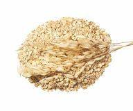 Free Bundle Of Oat Plant With Oatmeal Isolated On White Stock Photography - 132518892