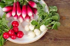 Bundle of organic radishes Royalty Free Stock Images