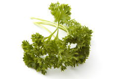 Bundle of parsley Stock Images