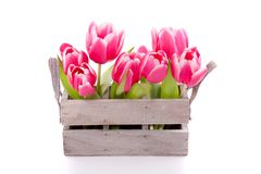 A bundle of pink tulips Stock Photography