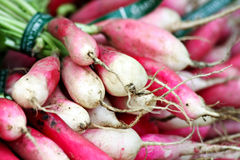 Bundle of Radishes Royalty Free Stock Image
